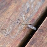 Natural Ways to Repel Mosquitos